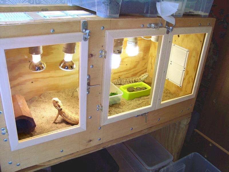 Как сделать домик для ящерицы из коробки
