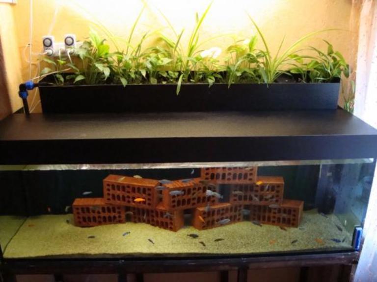 Как сделать то что нужно для аквариума