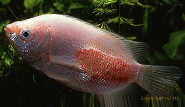 лечения болезни аквариумных рыб