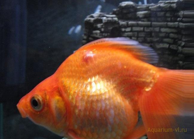 симптомы болезни рыб