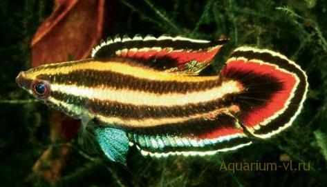 новости для аквариумистов