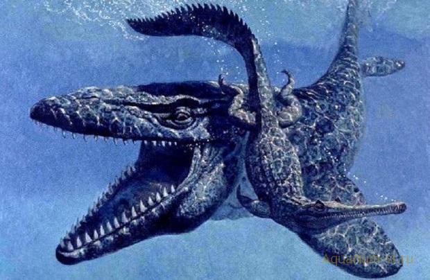 монстр в Австралийских водах