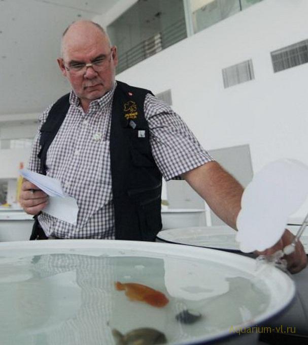 в Китае золотые рыбки