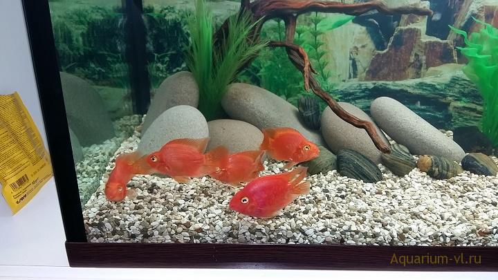рыбы находятся у поверхности