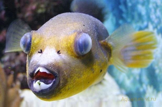 глаза рыб выступают из глазниц
