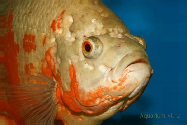 отверстия или углубления на голове рыб