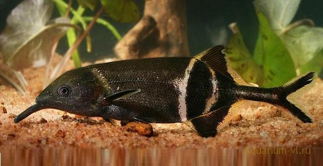 секреты электрических рыб