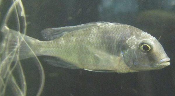 болезнь аквариумных рыб
