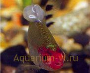 лечение болезни аквариумных рыб