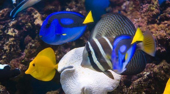 Удивительный факт рыб