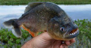 новости аквариумистики