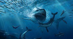 Монстр съел акулу