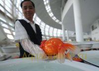 В Фучжоу конкурс рыбок