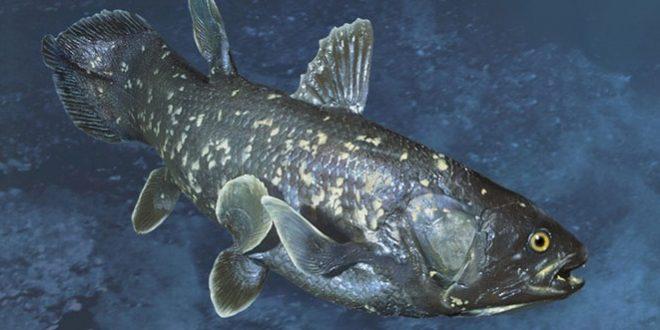 кистеперые рыбы