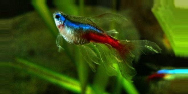 Ожирение аквариумных рыб