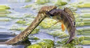 окунь или змея