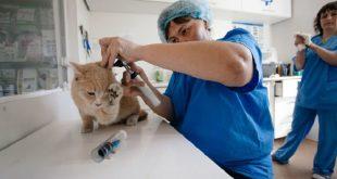 Ветеринарные клиники Благовещенска