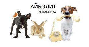 Ветеринарная клиника Благовещенска