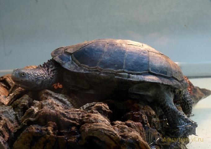 содержания черепахи в домашних