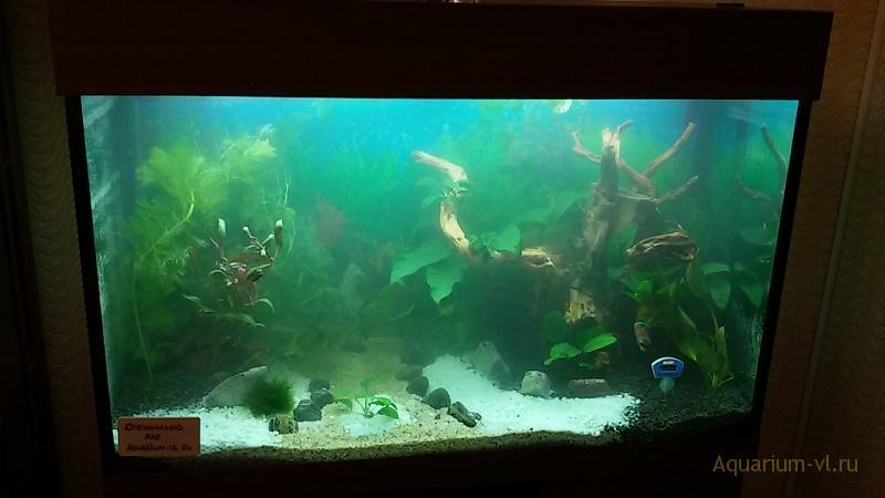 Прямоугольный аквариум 240 л