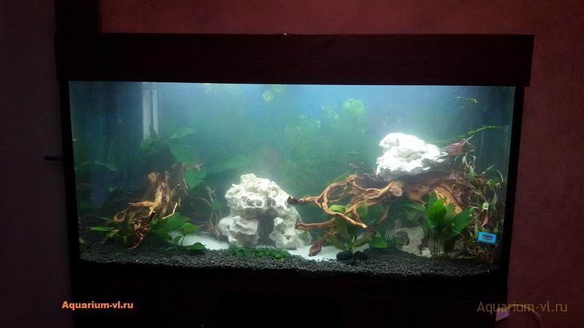 слизь на коряге аквариум 300 л