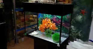 аквариум 60 литров сборка