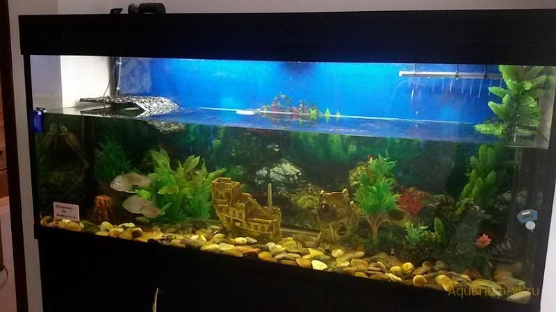 акватеррариума для красноухих черепах