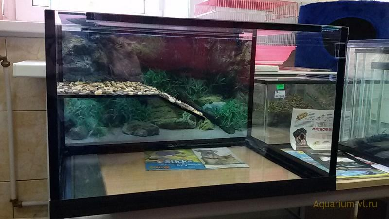 террариум для красноухой черепахи