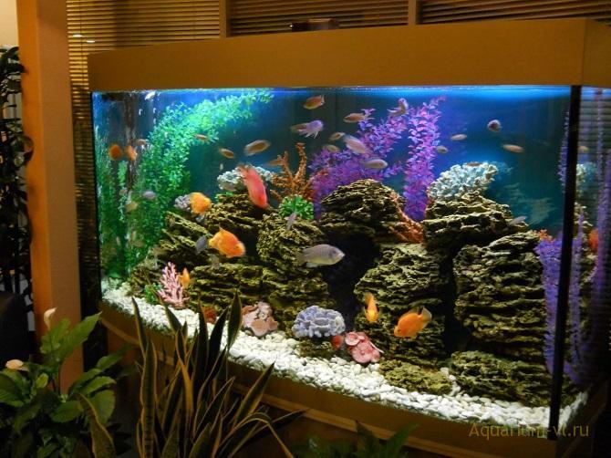 жёсткость воды в аквариуме