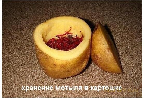 Хранение мотыля в картофеле