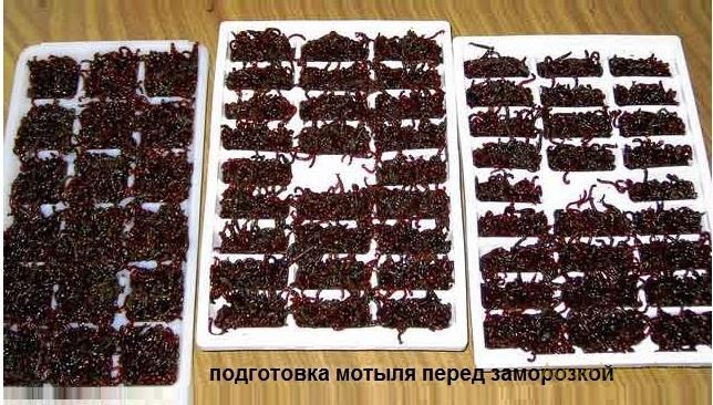 Как заморозить корм мотыль