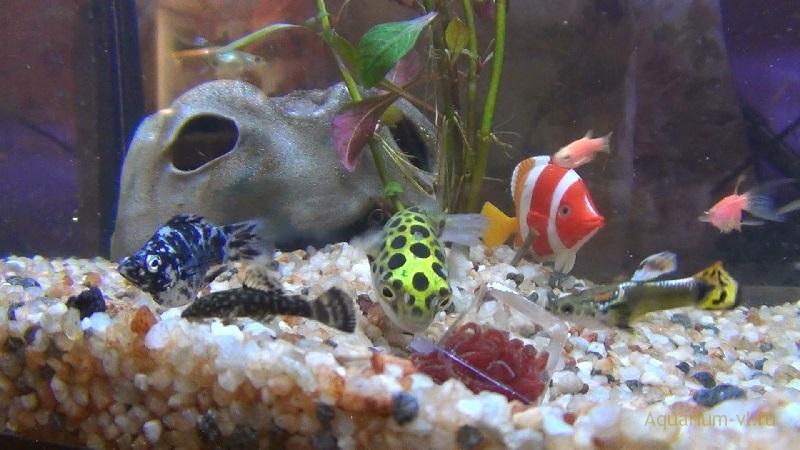 Кормление рыб мотылем