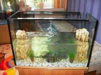Запуск аквариума 100 литров