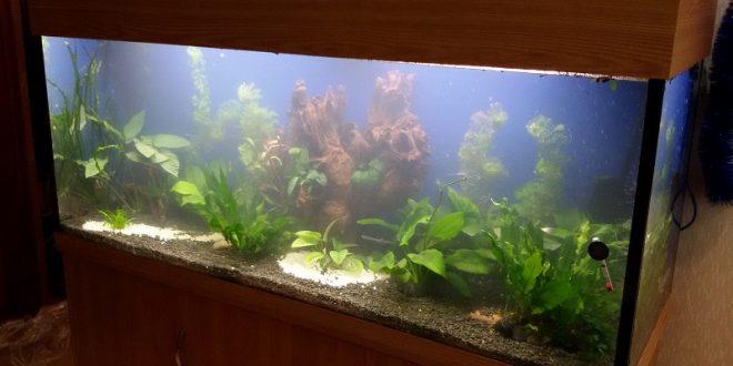 Где добыть корягу в аквариум