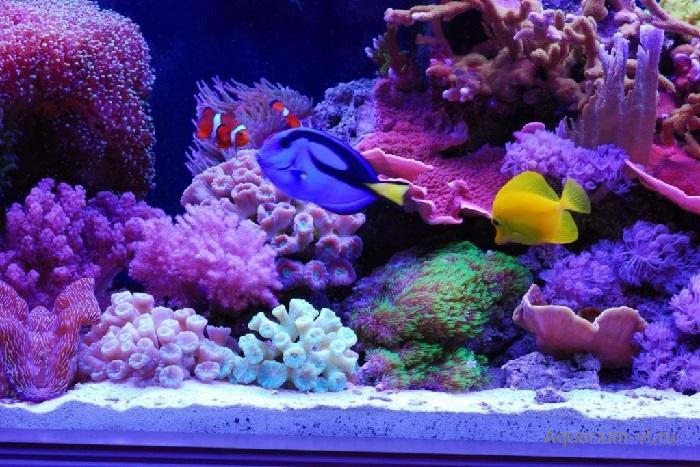 Замеры воды в морском аквариуме