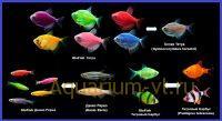 Флюоресцирующие аквариумные рыбки