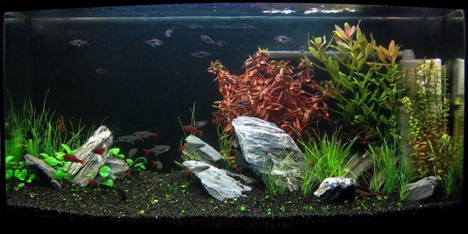 Камни и грунт в аквариум