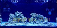 Живые камни для рифовых аквариумов