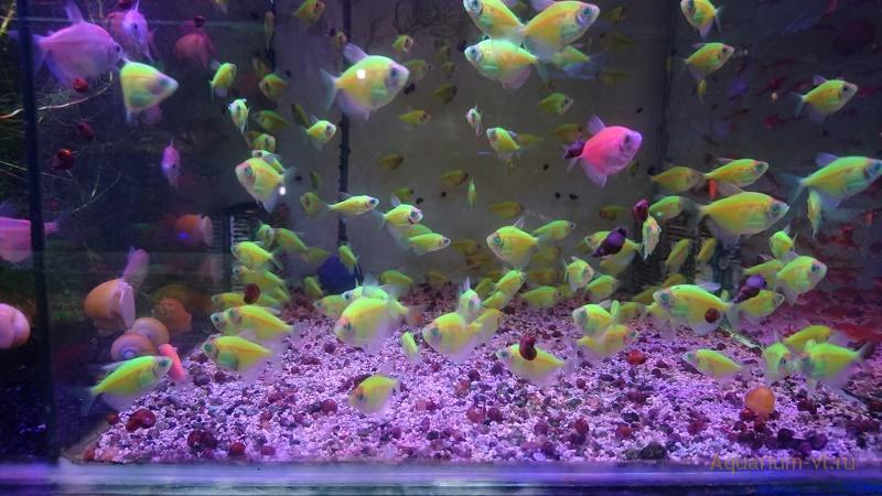 Как рассчитать количество рыбок