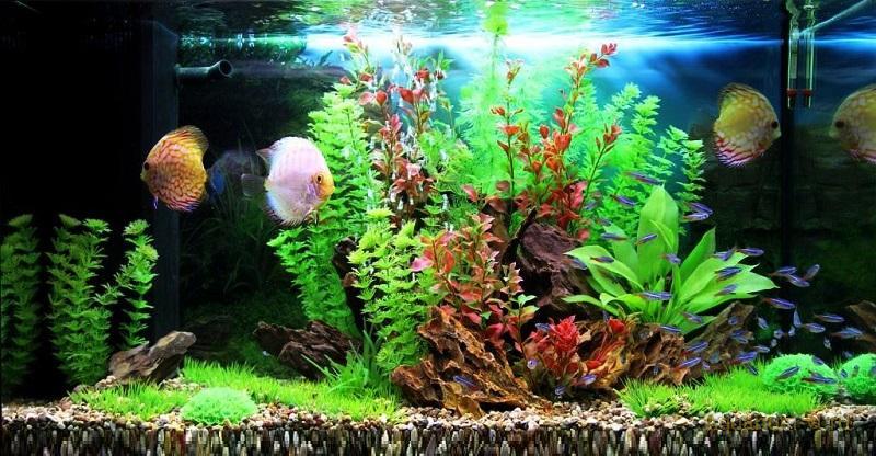 Искусственные или живые растения в аквариум