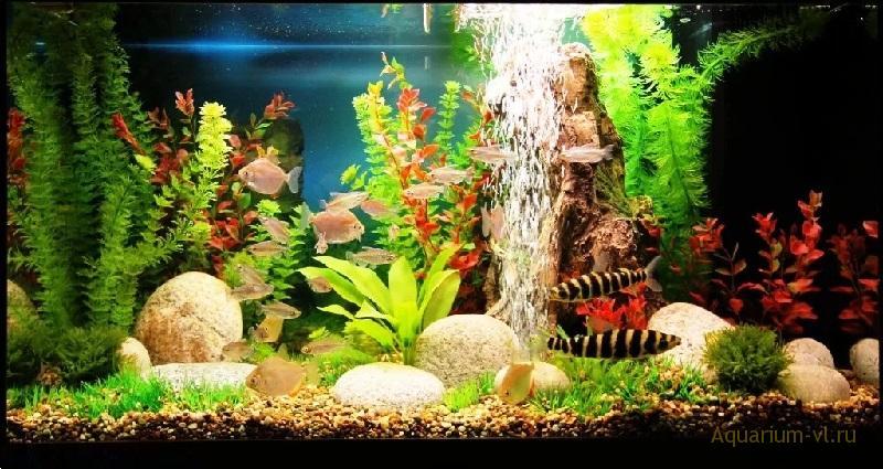 Искусственные растения аквариум 250 литров