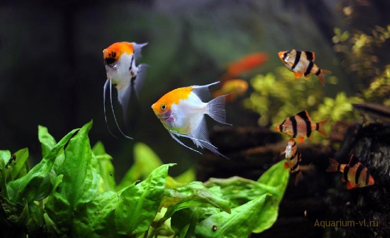 Исключения в совместимости рыбок