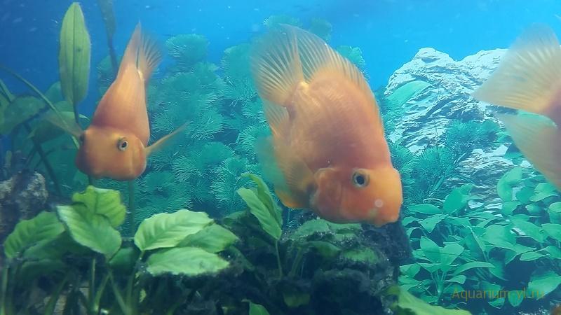 Совместимость видов рыбок