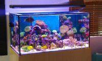 Температурный режим морского аквариума