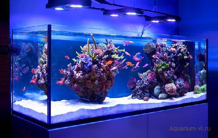 Температура в морском аквариуме