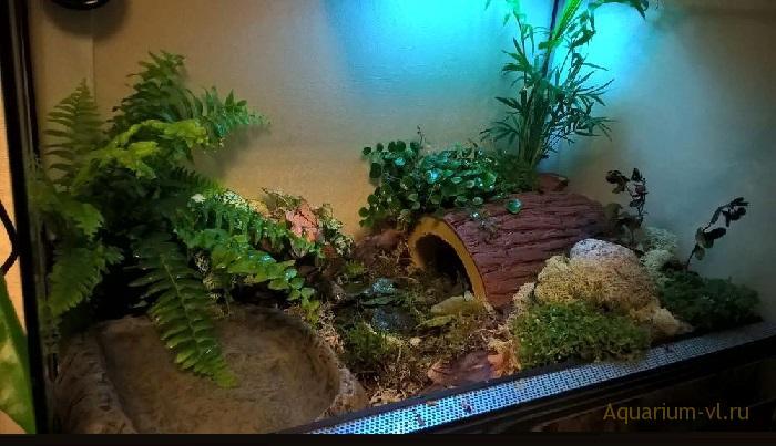 Черепаха геомида Шпенглера