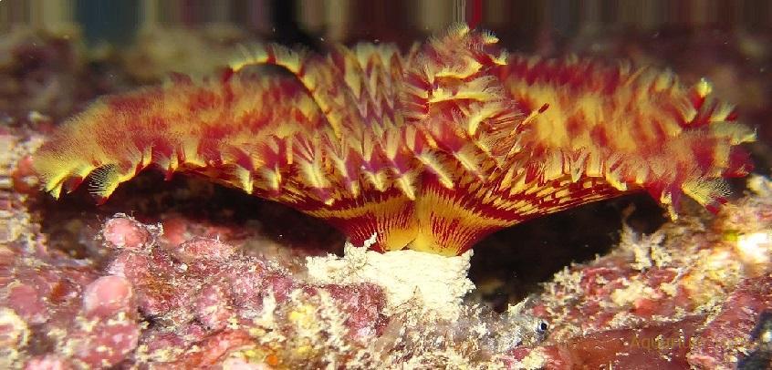 Многощетинковые черви (полихеты)