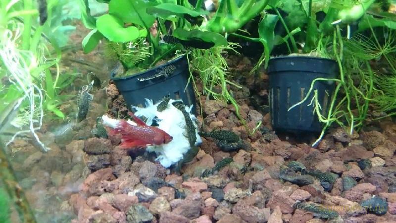 Смена корма для аквариумных рыбок