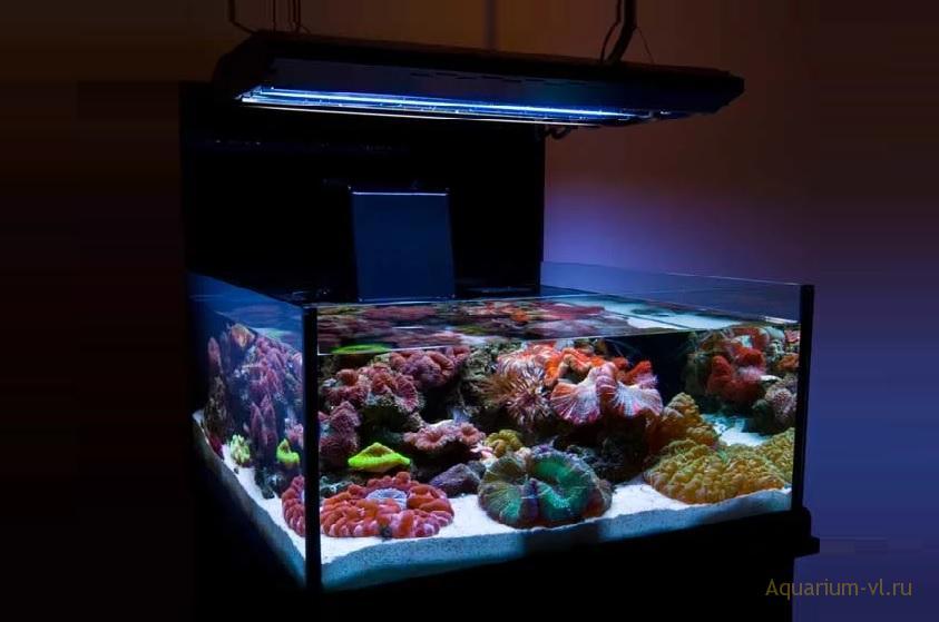 Рифовый морской нано-аквариум