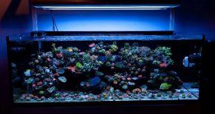 Устройство морского аквариума